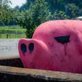 Photos: ピンクな豚1@嵐山