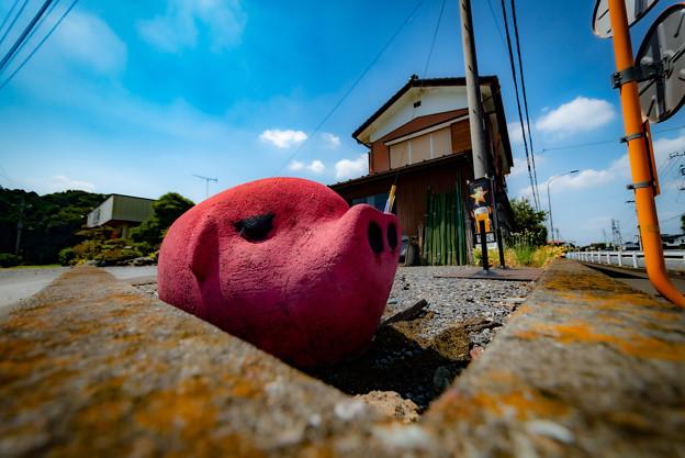 ピンクな豚2@嵐山