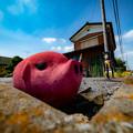 Photos: ピンクな豚2@嵐山