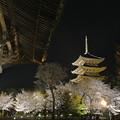 写真: 東寺