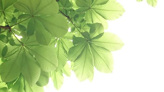 見上げると新緑が心地よい