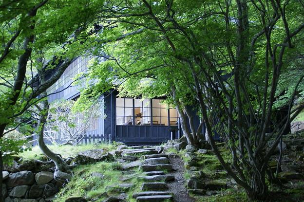 樹間の別荘