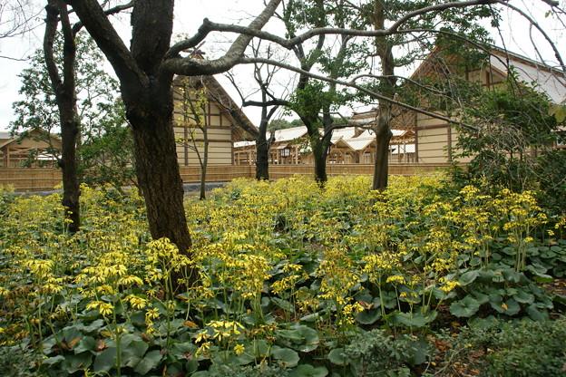 黄色い花と大嘗宮