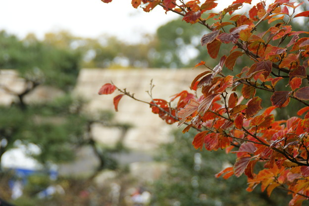 紅葉と天守台