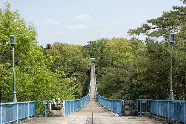 吊橋と新緑
