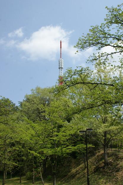 新緑とタワー