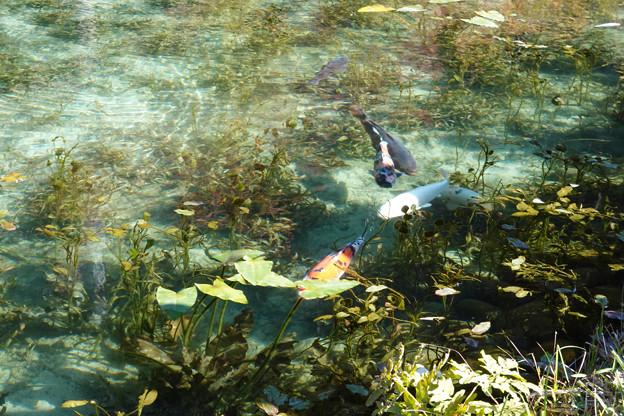 pz0740 モネの池