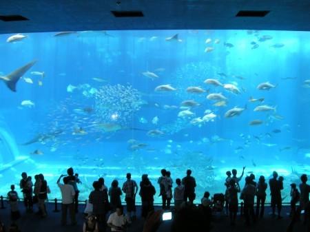 沖縄美ら海水族館 大水槽