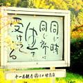 禅林寺の禅語をとりつづけてどれくらい
