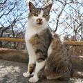 Photos: 伊吹の島猫