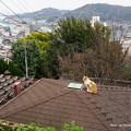 Photos: 坂道の猫