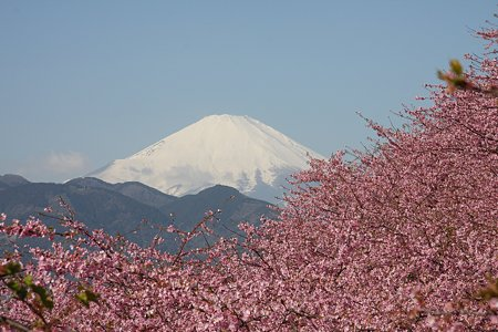 2009.02.21 松田山ハーブガーデン 河津桜と富士