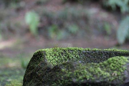 2009.03.07 報国寺 苔