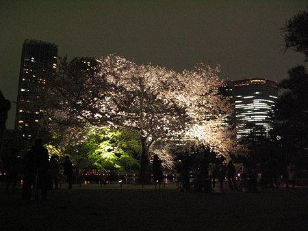 2009.04.04 浜離宮 さくら咲く~♪