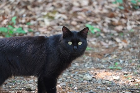 2014.06.01 瀬谷市民の森 森猫