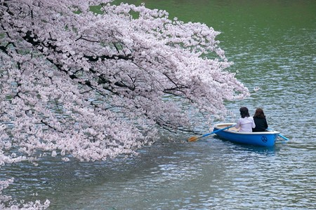 2017.04.06 千鳥ヶ淵 ボートで花見