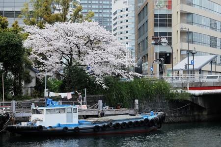 2017.04.10 桜木町 弁天橋のたもと