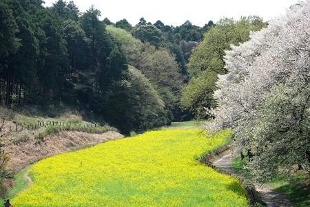 2017.04.14 追分市民の森 花畑