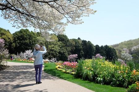 2017.04.14 里山ガーデン 桜の下から大花壇を望む