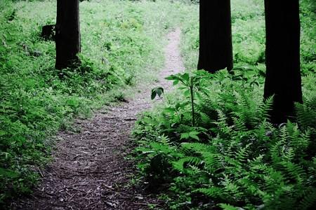 2017.05.25 瀬谷市民の森 森の道