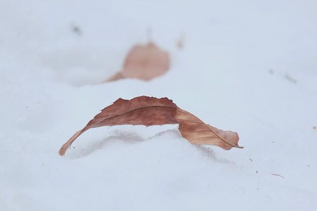 2018.01.28 追分市民の森 雪に枯葉