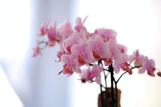 写真: 2018.02.13 横浜市イギリス館 階段の花