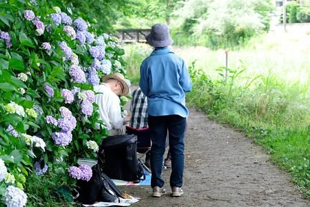2018.06.13 和泉川 紫陽花で風景画