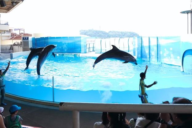2018.07.27 新江ノ島水族館 イルカショー