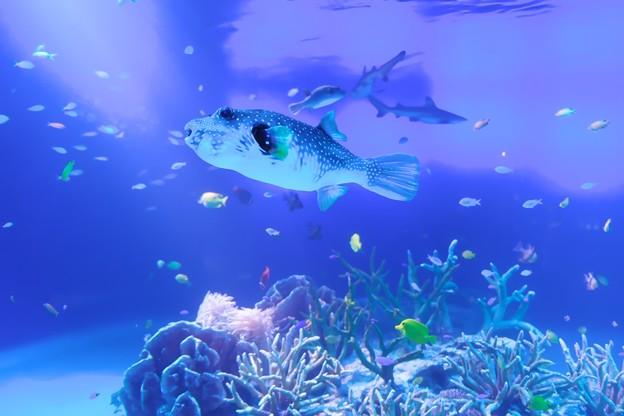 2018.07.27 新江ノ島水族館 さかなクンの頭