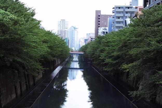 2018.08.13 目黒川 権之助坂へ向かう