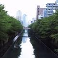 Photos: 2018.08.13 目黒川 権之助坂へ向かう