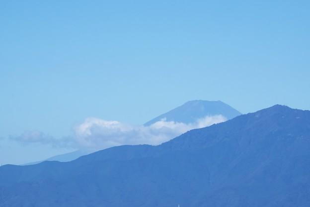 2018.10.01 瀬谷市民の森 富士山