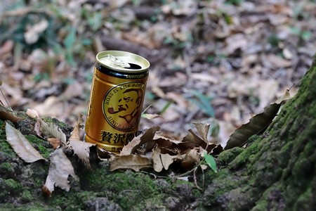 2018.11.25 瀬谷市民の森 団栗の木にボス