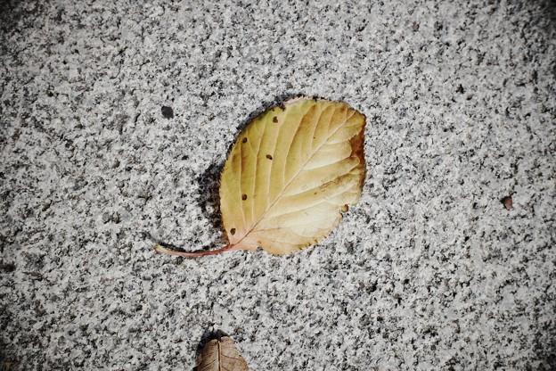 2018.12.05 山手 歩道 枯葉