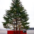 2018.12.11 クリスマスマーケットin横浜赤レンガ倉庫 ツリー