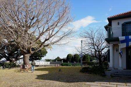 2018.12.24 ブラフ18番館 大きな銀杏の木