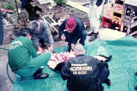1994.05.01 飯豊 熊の解体-2