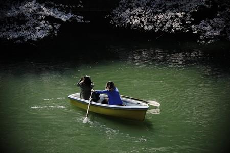 2019.04.04 千鳥ヶ淵 背景さくら