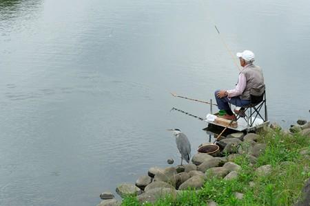 2019.07.05 和泉川 釣り人とアオサギ