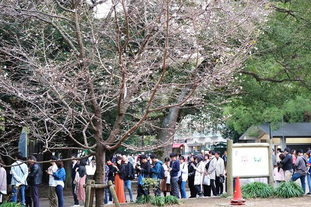 2019.11.03 上野の森美術館 冬桜