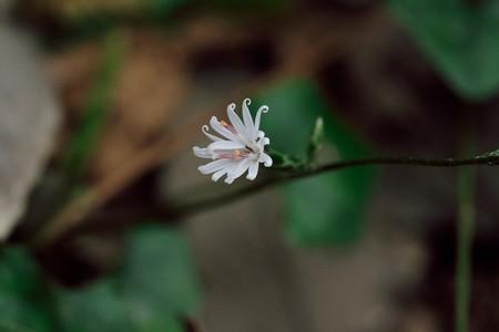 2019.11.14 瀬谷市民の森 キッコウハグマ