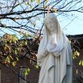 Photos: 2019.11.16 カトリック山手教会 マリア像 大浦天主堂日本之聖母を思い出す