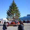 Photos: 2019.11.29 赤レンガ倉庫 クリスマスマーケット ツリー