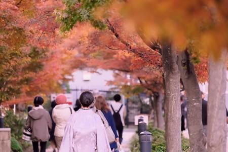 2019.12.08 桜木町 紅葉坂