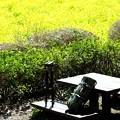 Photos: 2020.03.20 追分市民の森 菜の花畑 ベンチ