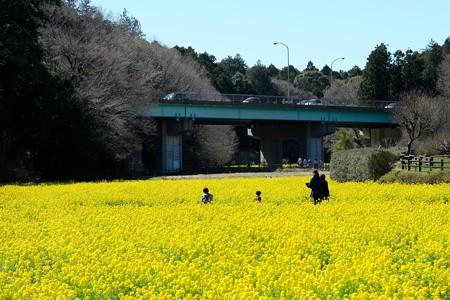 2020.03.20 追分市民の森 菜の花畑 連休初日