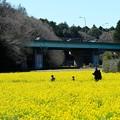 Photos: 2020.03.20 追分市民の森 菜の花畑 連休初日