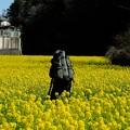Photos: 2020.03.20 追分市民の森 菜の花畑