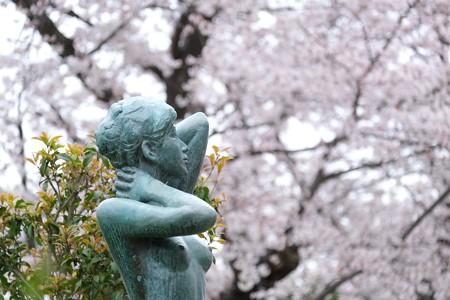 2020.03.31 和泉川 区役所の桜