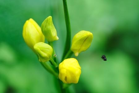 2020.04.28 瀬谷市民の森 金蘭に小さなクモ 綱渡り